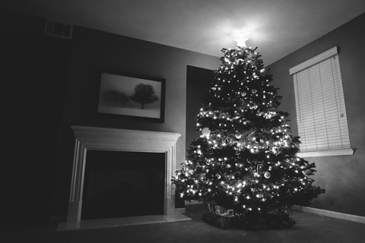 20111129_christmastree_11bw