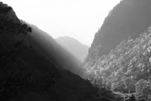 black-and-white-dark-forest-637-524x350